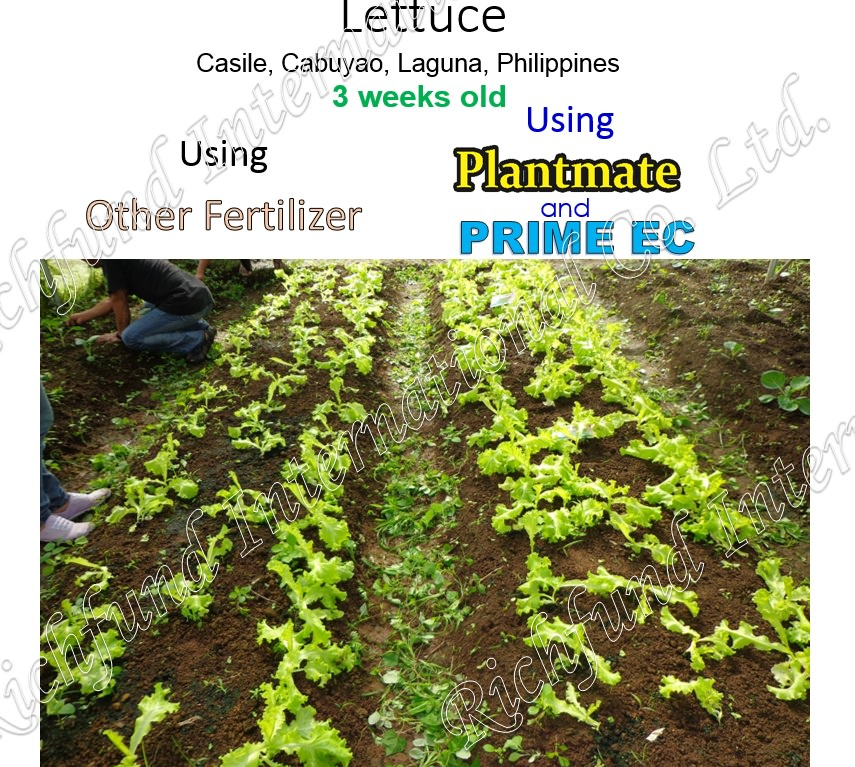 Best organic fertilizer in the Philippines Effective organic Fertilizer Seed germination Bacterial Chemically damage soil Rehabilitate Soil Pathogenic Bacteria El niño Drought Bacterial disease Making compost more potent Plantmate Organic Fertilizer Inter International Fertilizer International Organic Fertilizer PH Neutralization 5.5 pH Nuetral pH Weed Control Natural Herbicide Natural Insect Repellant Good Harvest