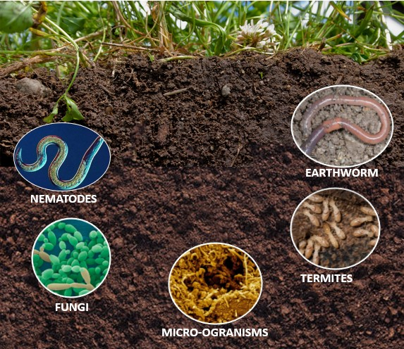 Organisms in the Soil